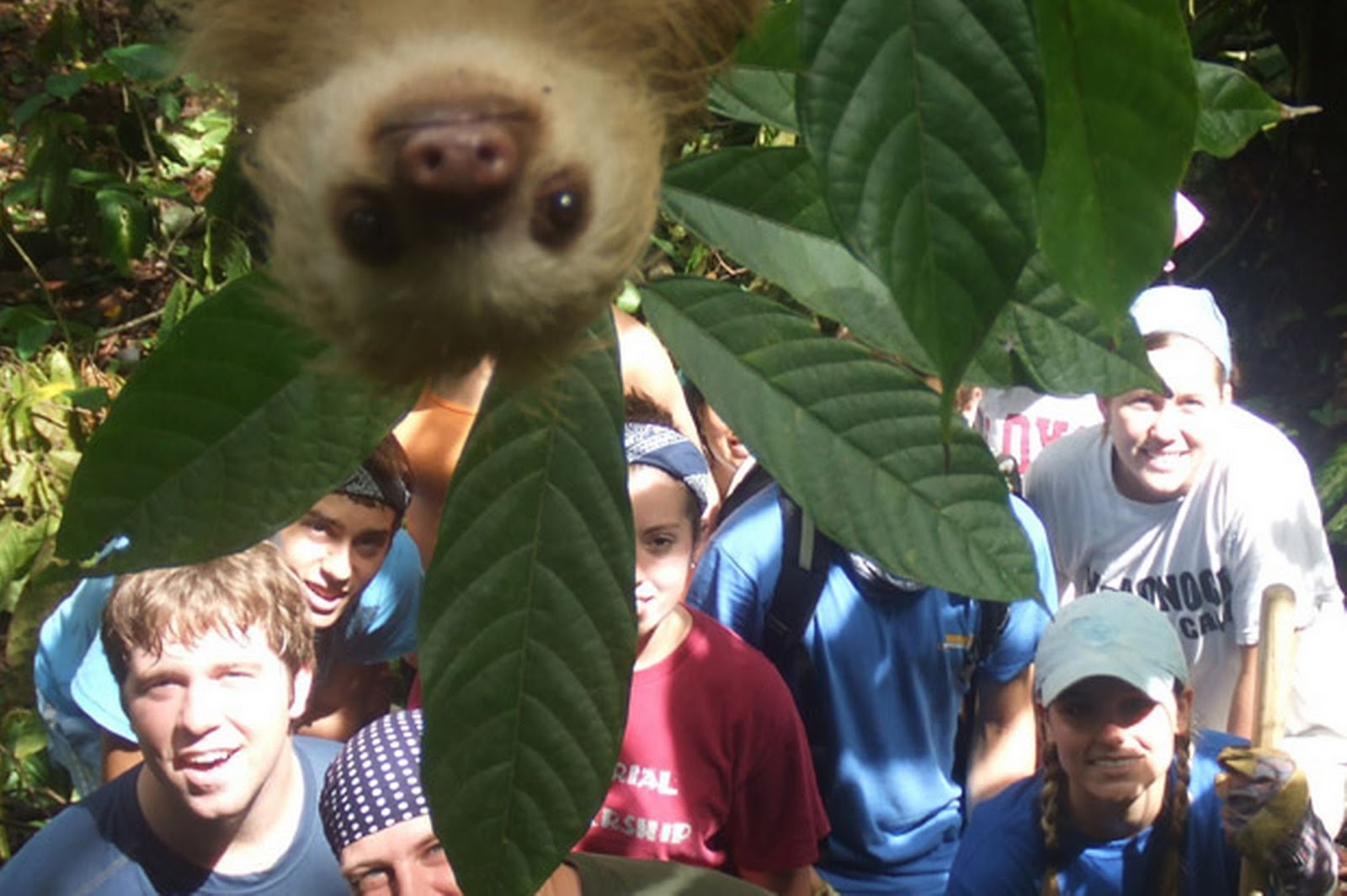 And just because here s one more animal photobomb this time a sloth