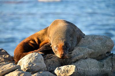 Kaikoura, seal colony
