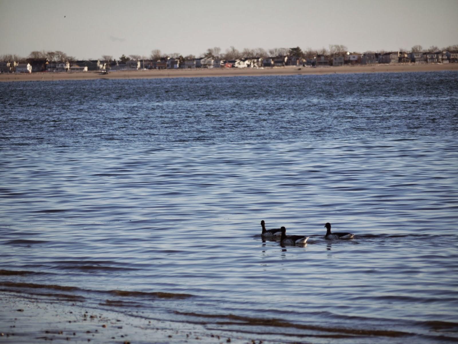 Frogma sheepshead bay duck walk 1 4 2014 for Sheepshead bay fishing