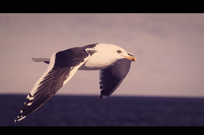 Next Jonathan Livingston Seagull New HD Wallpapers - jonathan livingston seagull wallpapers