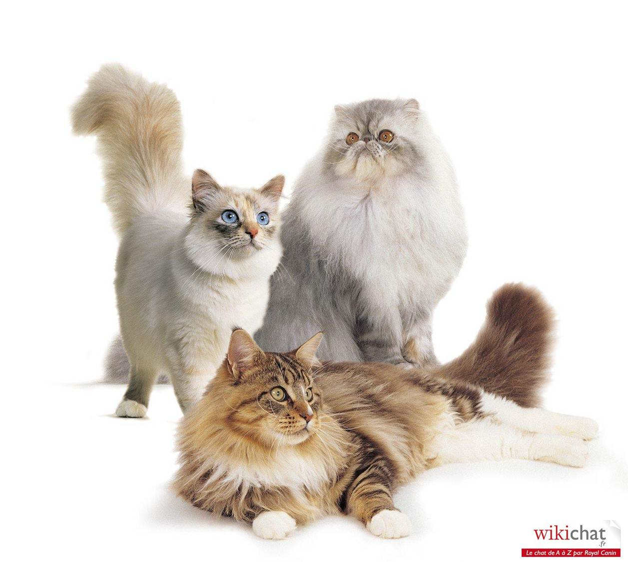 Chat Nintendgs Cats