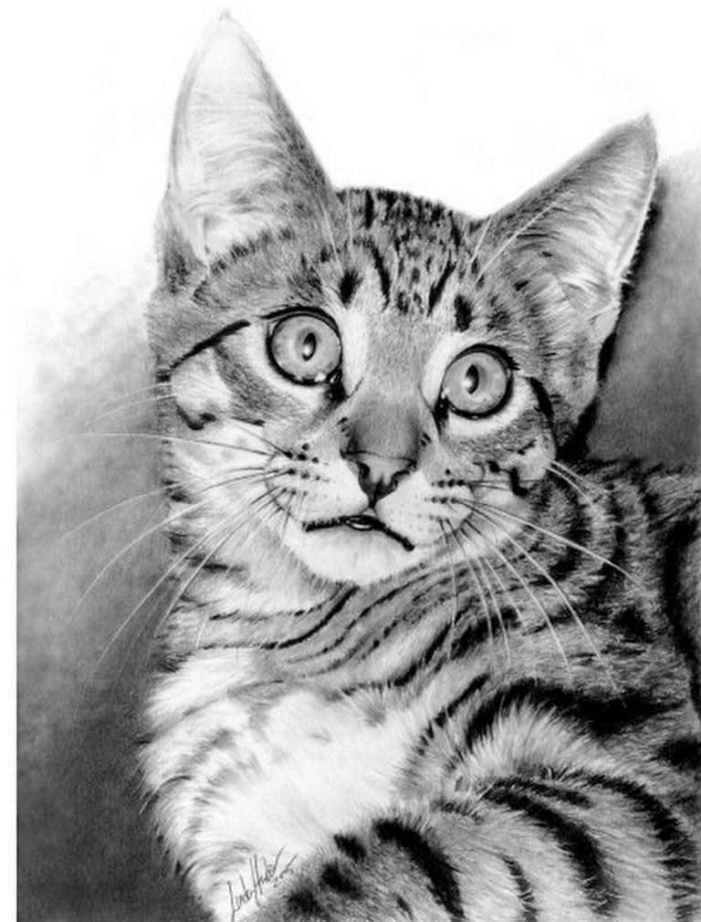 Arte pinturas leo dibujos de animales l piz sobre papel - Dibujos de gatos pintados ...
