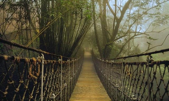 Hanging Bridges, Wayanad, Kerala