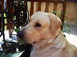Churchill, a kutyánk