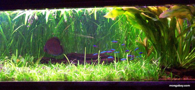 3d fish tank wallpaper 3d wallpaper box for Amazon aquarium fish