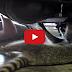 Ρακούν μηχανικός βοηθάει μάστορα στην επισκευή αυτοκινήτου