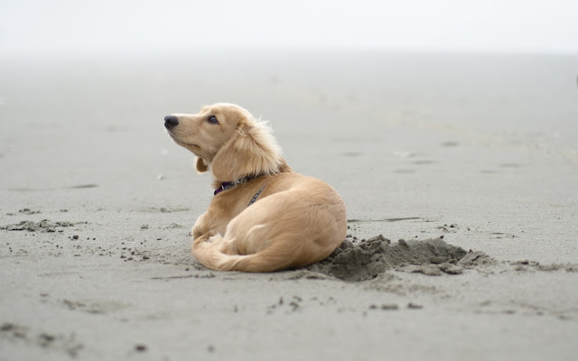 Dog On The Sand
