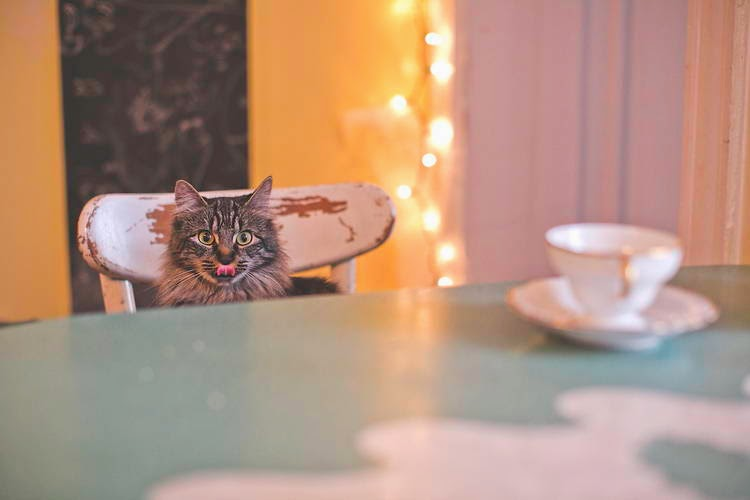 Funny cats - part 99 (40 pics + 10 gifs), cat pictures, cat at dinner table