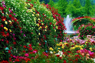Mil colores en el paisaje