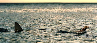 Cão sendo arrastado por um barco