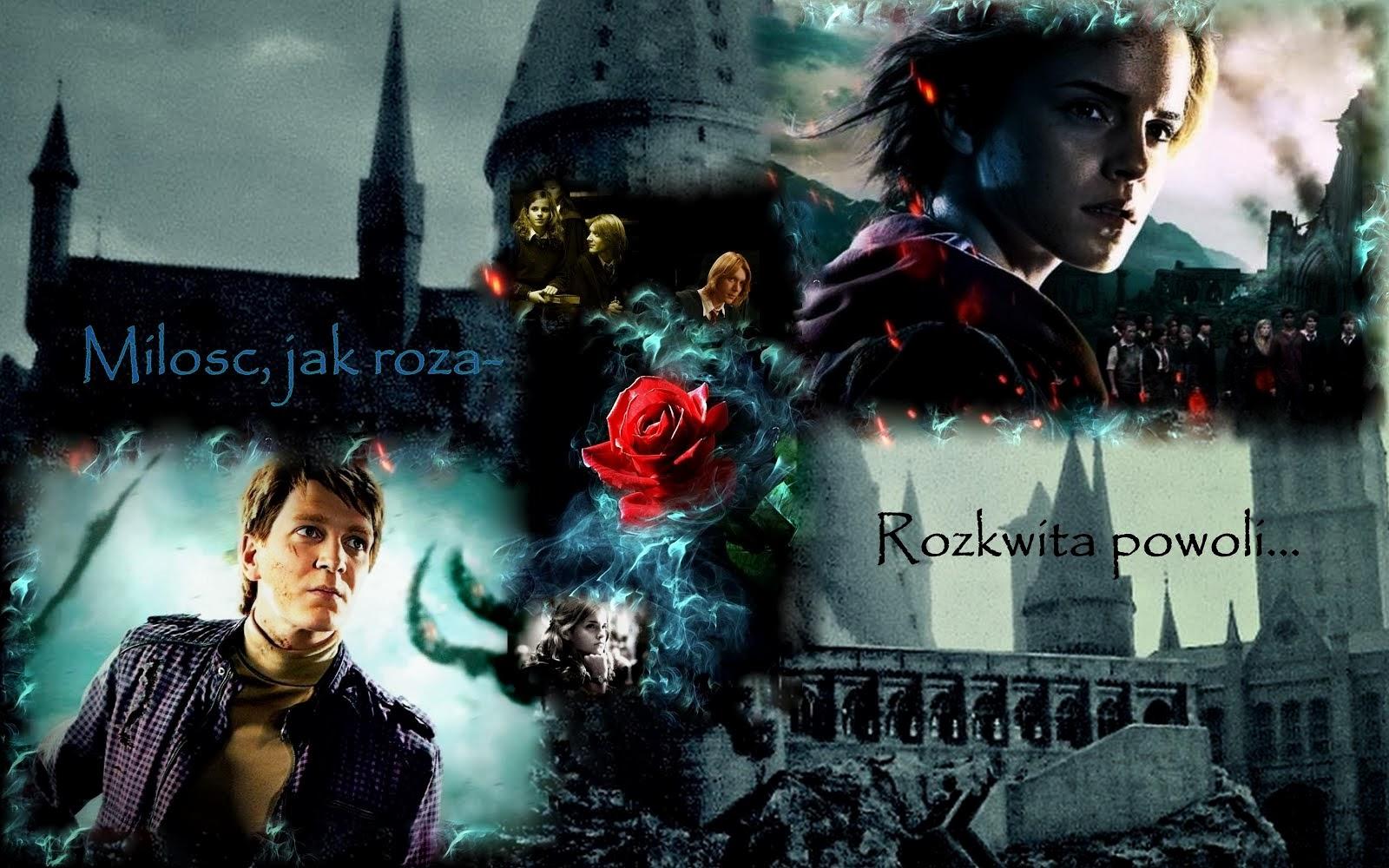 Miłość jak róża ~ rozkwita powoli...