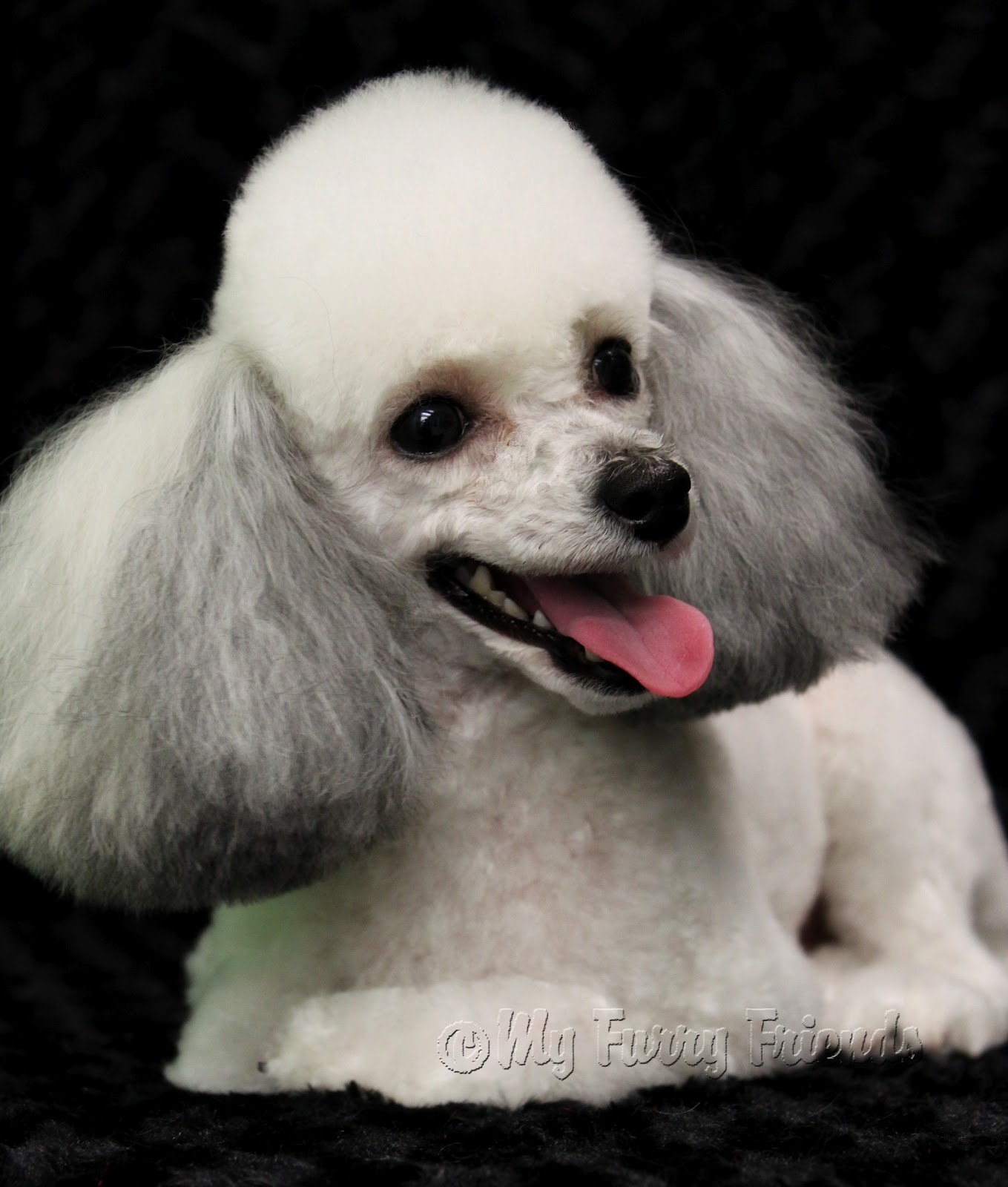Pictures of toy poodle hair cuts Basic Engine Parts HowStuffWorks
