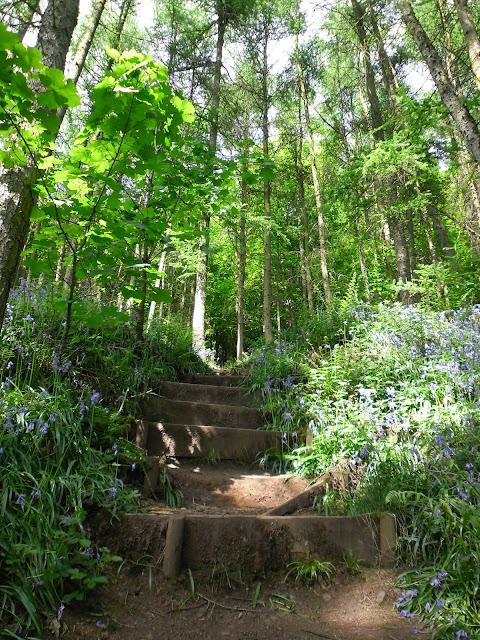Bluebells - Woodland photography