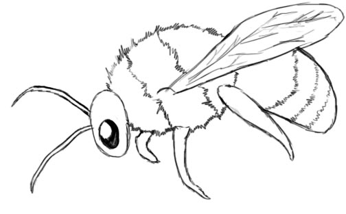 How to draw a bumble bee - photo#17