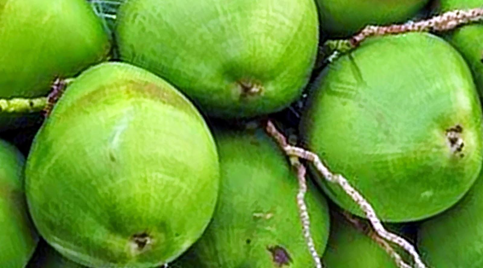 Manfaat Sehat Buah Kelapa yang Perlu untuk Diketahui