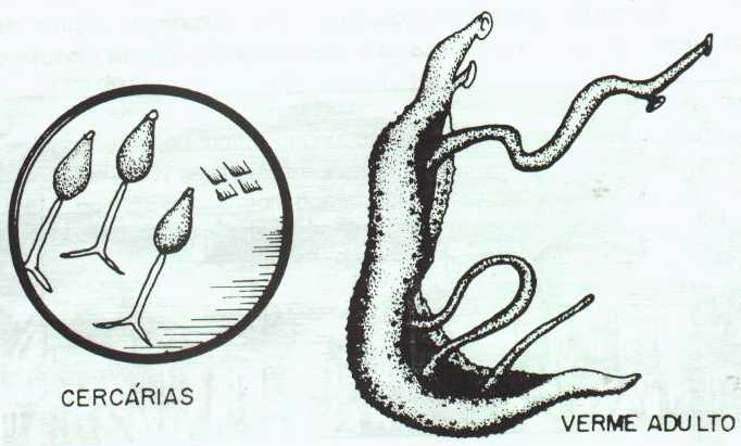 Em que parasitas é necessário tomar um teste de sangue