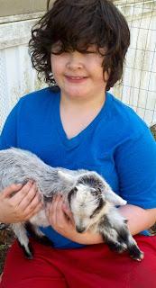 Nigerian, Nigerian dwarf goat, dwarf goats, mini goats, billie goats, goat cheese, goat milk