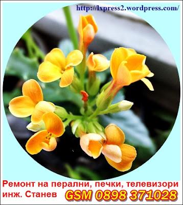 майстор за ремонт на перални, лято, цвете, пожелание за хубав ден