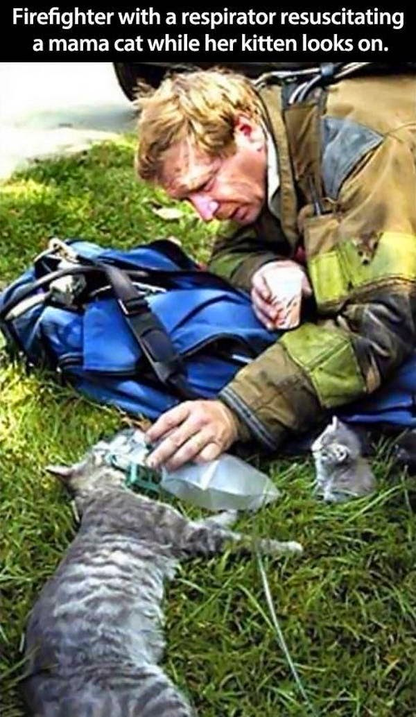 People doing amazing things for animals (28 pics), firefighter with a respirator resuscitating a mama cat while her kitten looks on