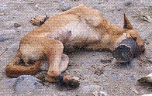 Dog Rescue Irlam