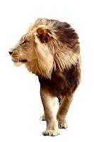 León orgulloso