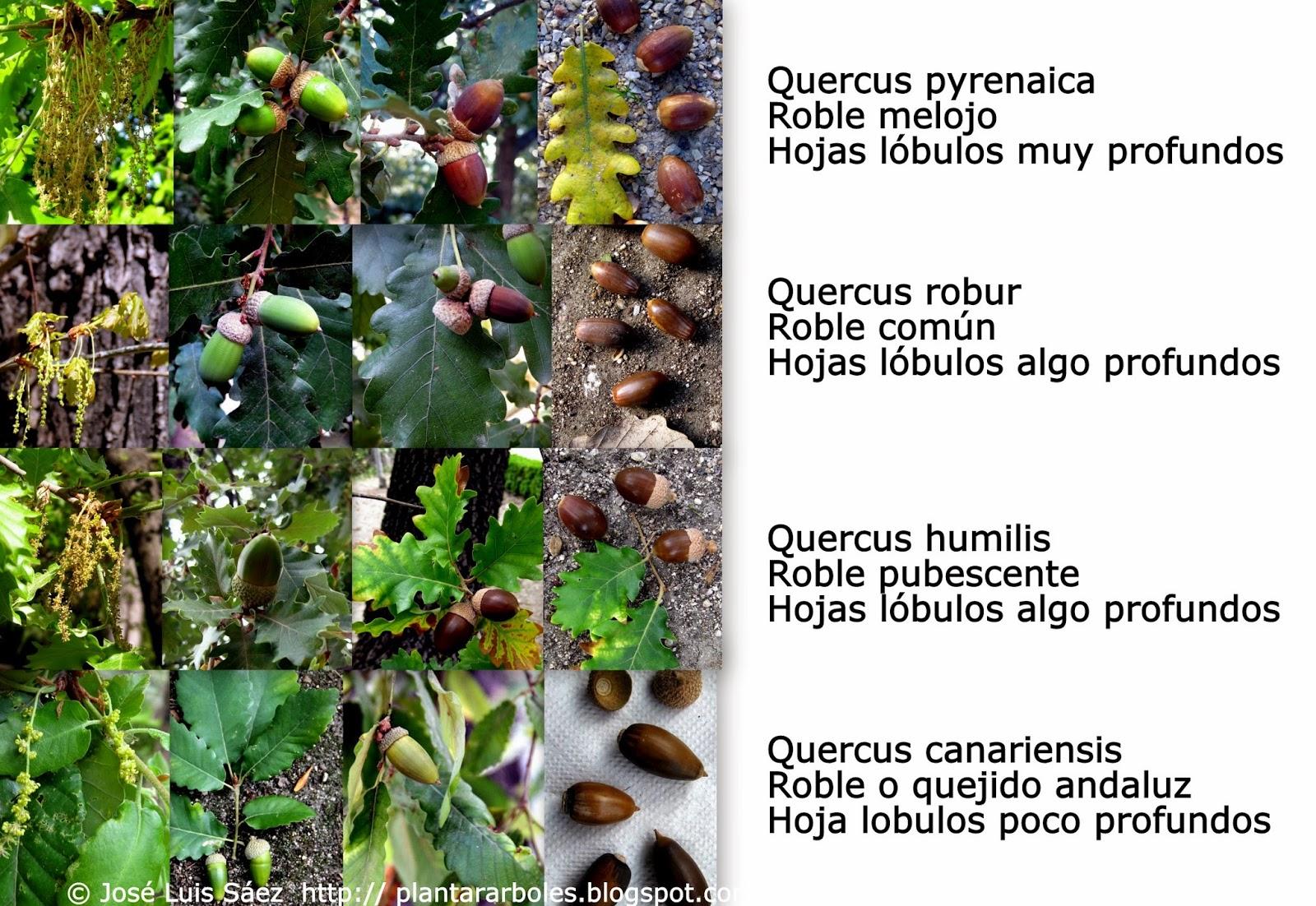 Fotos De Plantas Flores Y Arboles - Guia de plantas en Waste magazine