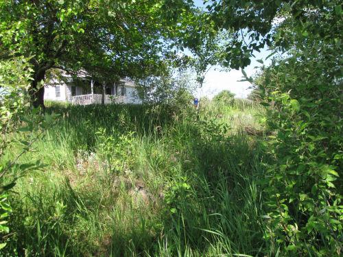 weedy flower garden