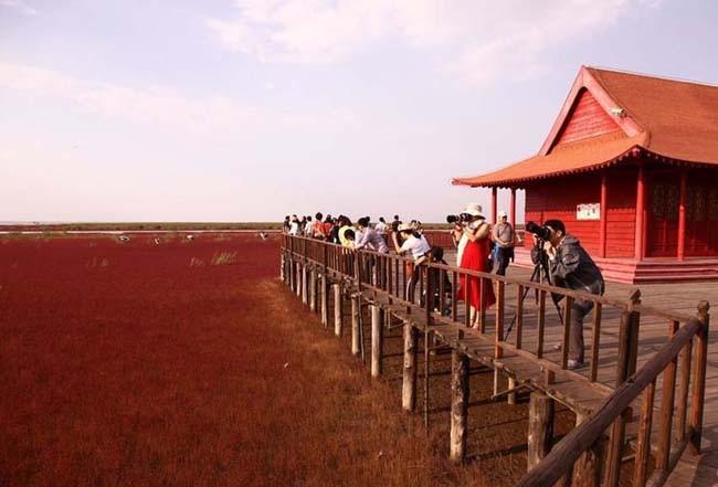 شاطئ الصين الاحمر ، صور لشاطئ غريب في الصين ، اغرب شواطئ العالم
