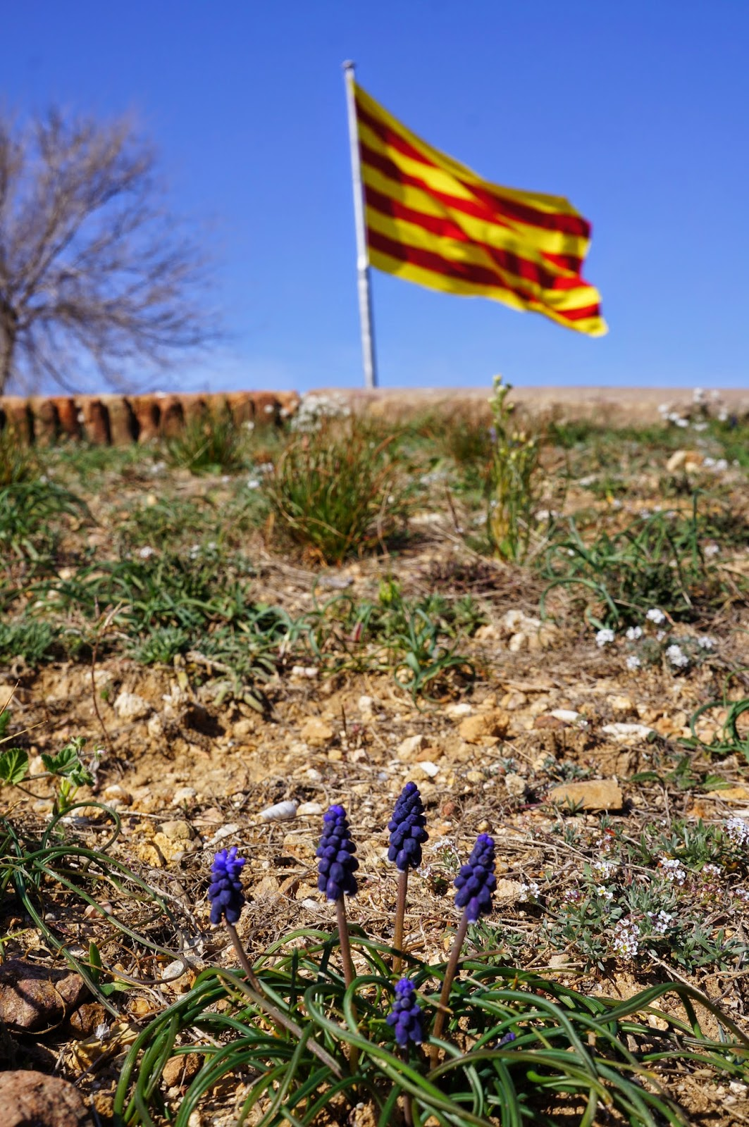 La Senyera Catalonian / Catalan flag at the Montjuic Castle, Barcelona Spain.