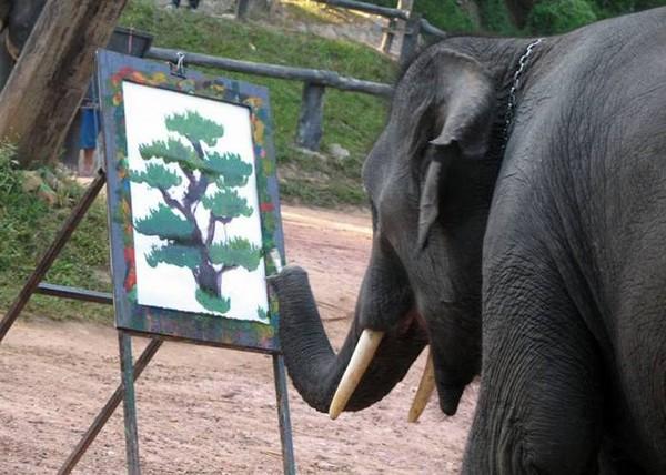 hewan paling cerdas