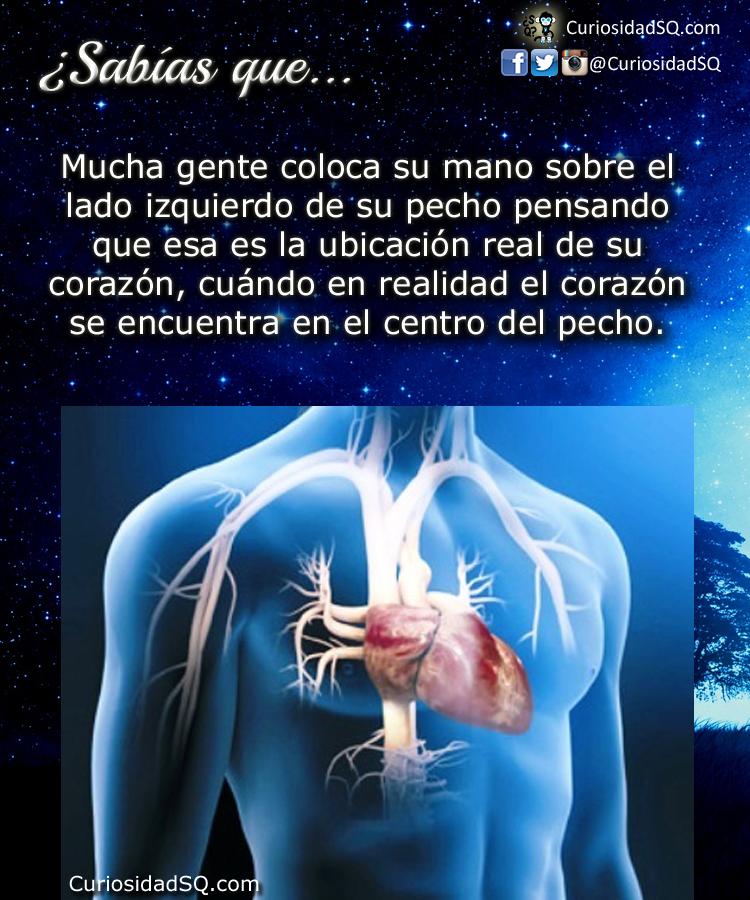 Sabías que?: El corazón no está al lado izquierdo del pecho, está en ...