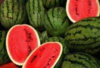 Το καρπούζι Τριφυλίας κερδίζει όλο και περισσότερες αγορές