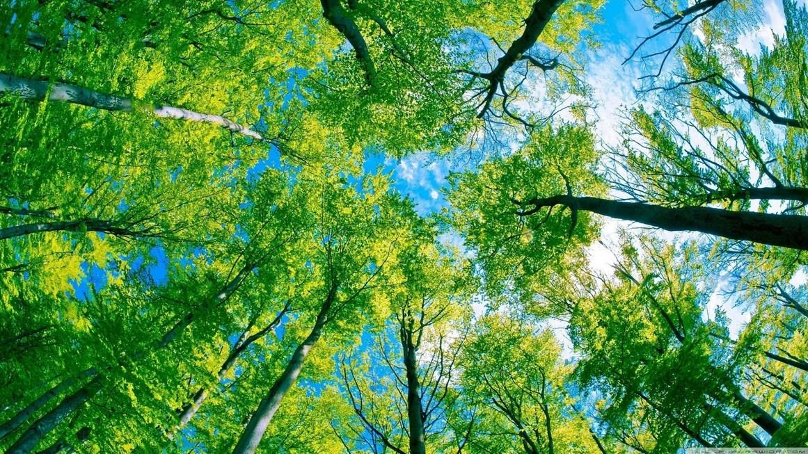 Fotografi Landscape Peringatan Hari lingkungan Hidup 10 Januari Mari Bersinergi dengan Alam pohon tinggi
