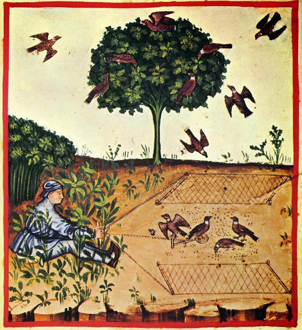 Eagle bird essay in hindi