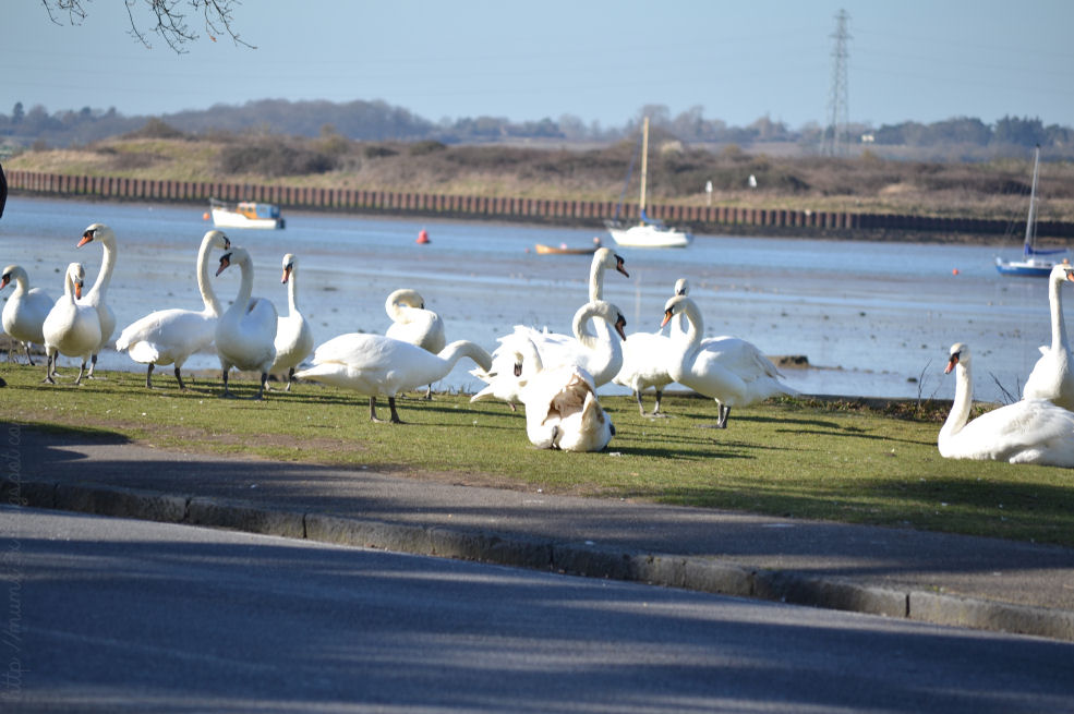 Swans @ ups and downs, smiles and frowns