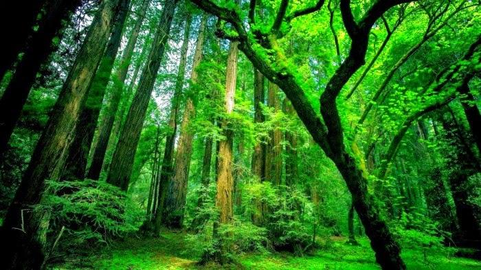 Keindahan Kehijauan Alam Semulajadi