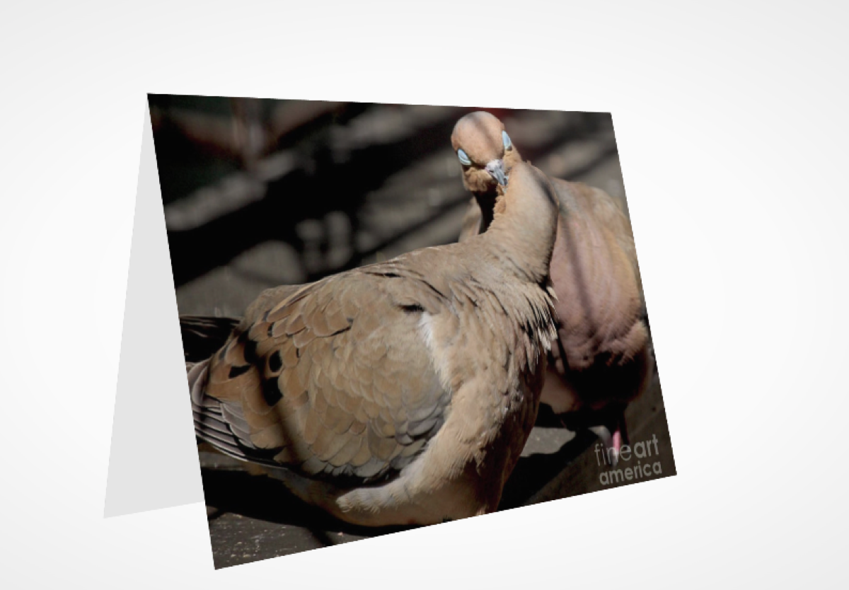 """COOING MOURNING DOVES 1""  (GREETING CARD OR PRINT)"