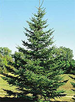 MENOMINEE COUNTY TREES