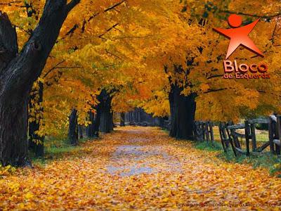 Wallpaper do Partido Bloco de Esquerda emblema do BE inclinado Árvores no Outono para utilizar como fundo de tela do seu ambiente de trabalho