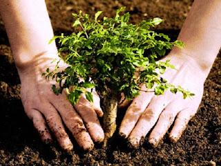 IMAGEN Planta árboles