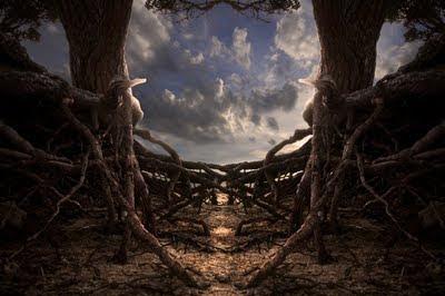 El valor de las raíces