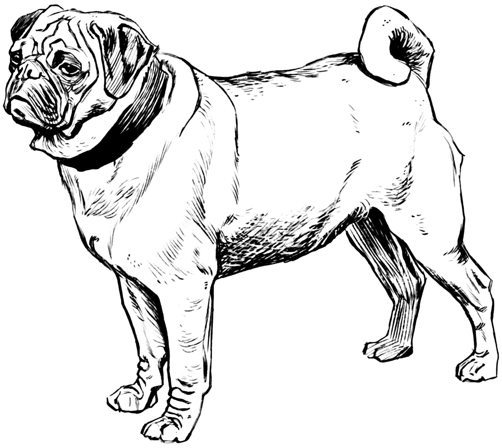 pugs coloring pages to print - photo#21