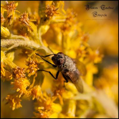 Nahaufnahme einer Fliege