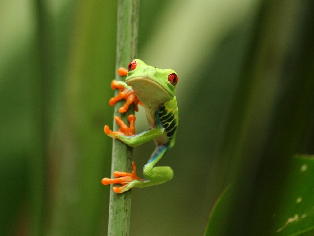 Free high definition wallpapers colorful frog wallpapers and