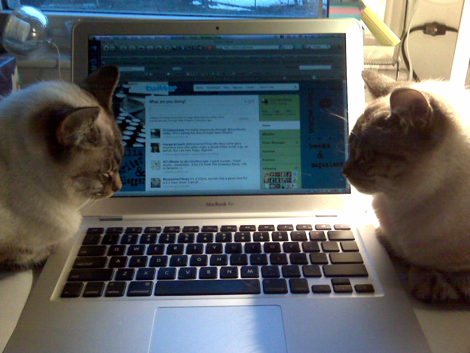 Коты в твиттере