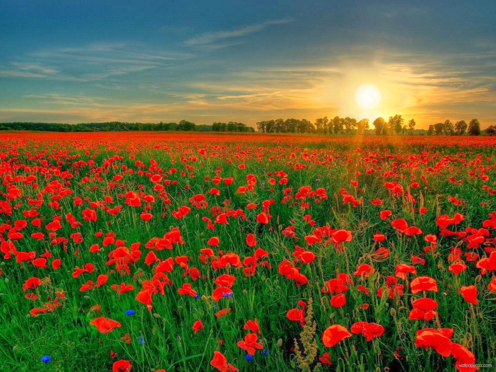Bluestocking Redneck: Veterans Day 2015: In Flanders Fields & Beyond