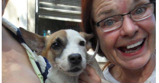 Death Row Dog Rescue Hollywood Fl