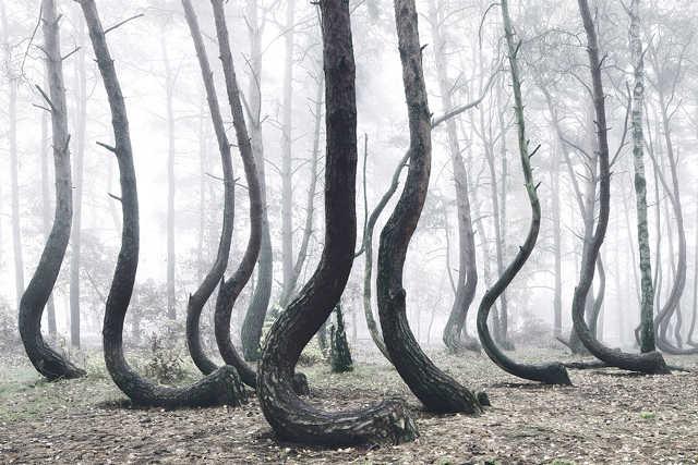 un misterioso bosque en Polonia
