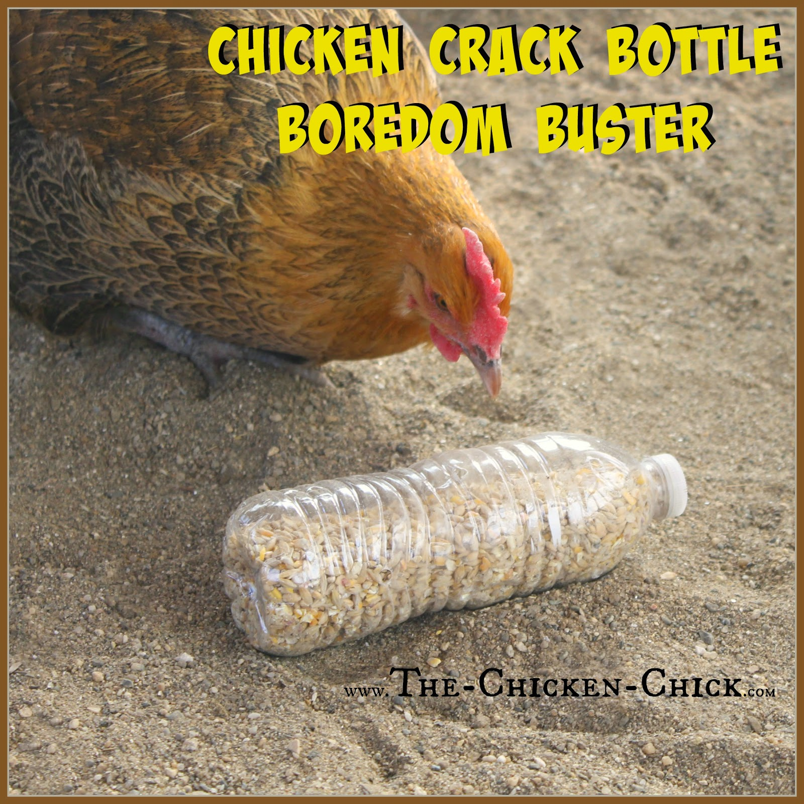 Backyard Chickens In Winter : The Chicken Chick? 20+ Winter Boredom Busters for Backyard Chickens!