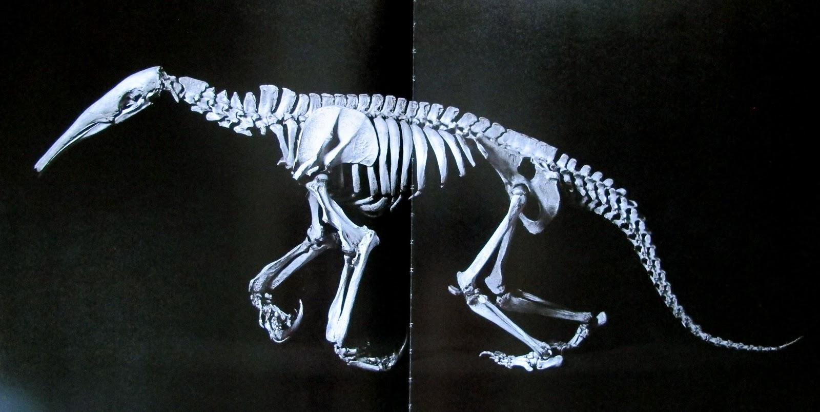Aardvark skeleton - photo#23